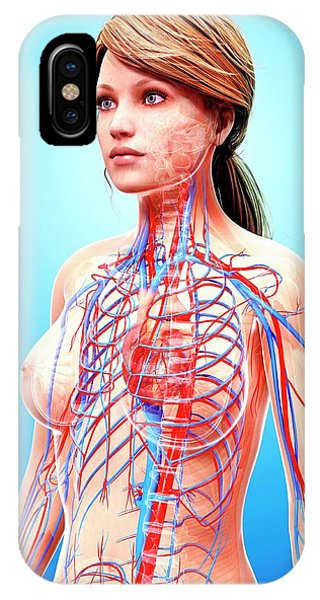 Female Cardiovascular System Phone Case by Pixologicstudio/science Photo Library