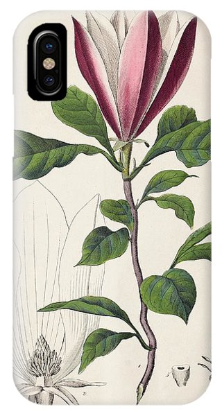 1847 Magnolia Primitive Flower Bracts IPhone Case