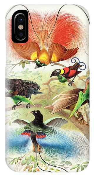 Behaviour iPhone Case - 1894 Bird Of Paradise Wrong Display Poses by Paul D Stewart