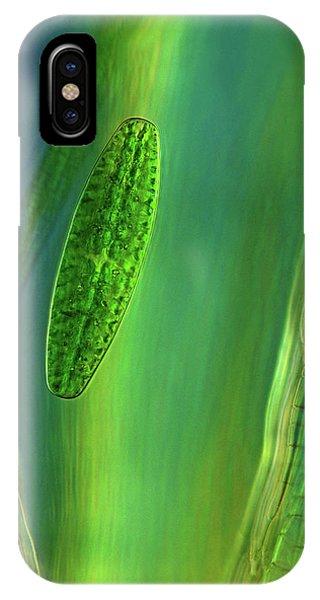 Desmid On Sphagnum Moss IPhone Case