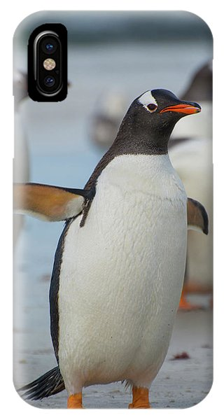Bravery iPhone Case - Falkland Islands by Inger Hogstrom