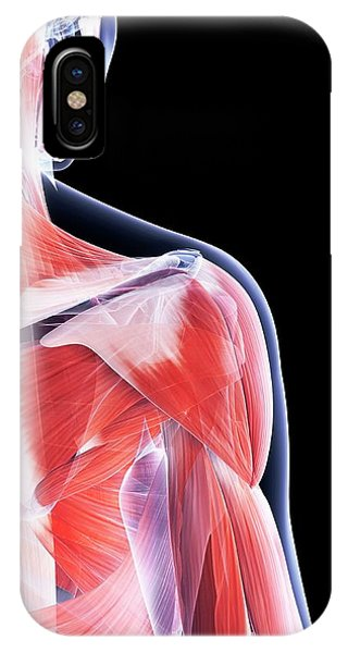 Female Muscular System Phone Case by Sebastian Kaulitzki