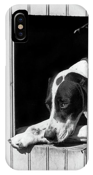1930s Sad Hunting Dog Pointer Looking IPhone Case