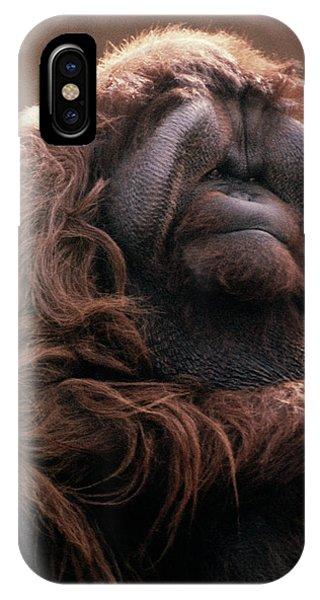 1970s Mature Adult Orangutan Pongo IPhone Case