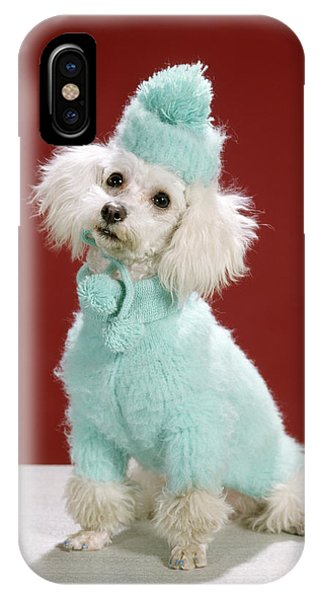 Knit Hat iPhone Case - 1970s White Poodle Wearing Blue Sweater by Animal Images