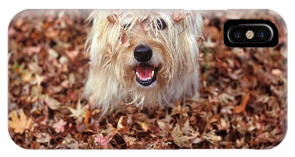 Fall Foliage iPhone Case - 1990s Dog Covered In Leaves by Vintage Images