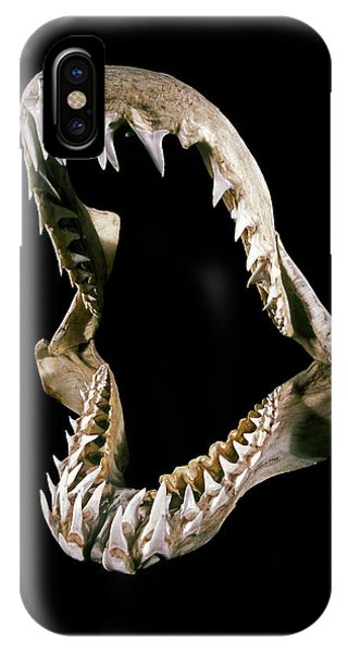 19th Century Shark Jaw Phone Case by Patrick Landmann/science Photo Library