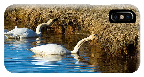 1st Swans Of The Season IPhone Case