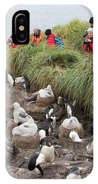A Black Browed Albatross IPhone Case