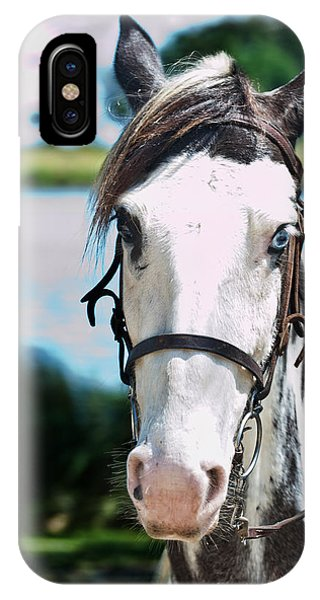 A Horse Is A Horse Of Course Phone Case by Frank Feliciano