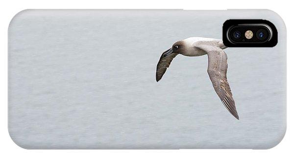 Albatross iPhone Case - A Light Mantled Albatross by Ashley Cooper
