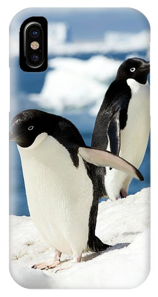 Adelie Penguins Phone Case by William Ervin/science Photo Library