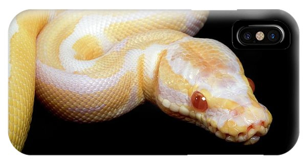 Infrared Radiation iPhone Case - Albino Royal Python by Pascal Goetgheluck/science Photo Library