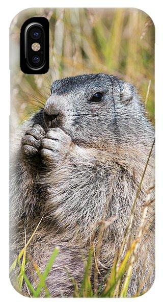 Alpine Marmot (marmota Marmota Phone Case by Martin Zwick