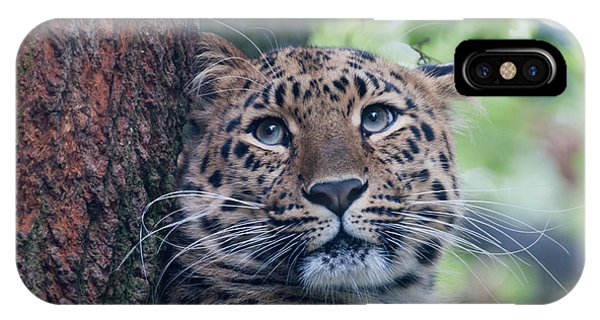 Amur Leopard IPhone Case