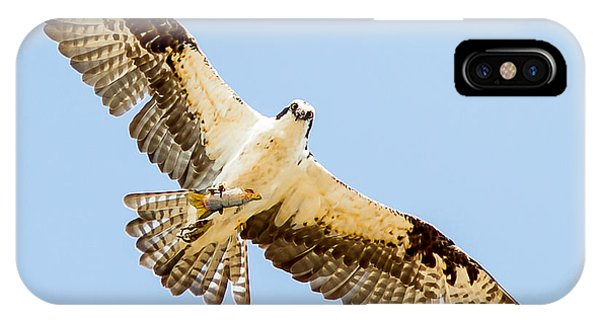 An Osprey Feeding On A Trout IPhone Case