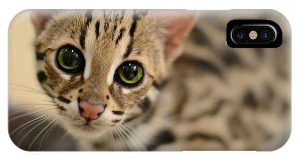 Cat iPhone Case - Asian Leopard Cub by Laura Fasulo