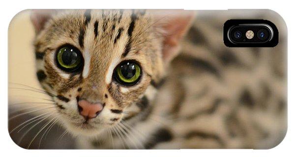 Cute Kitten iPhone Case - Asian Leopard Cub by Laura Fasulo