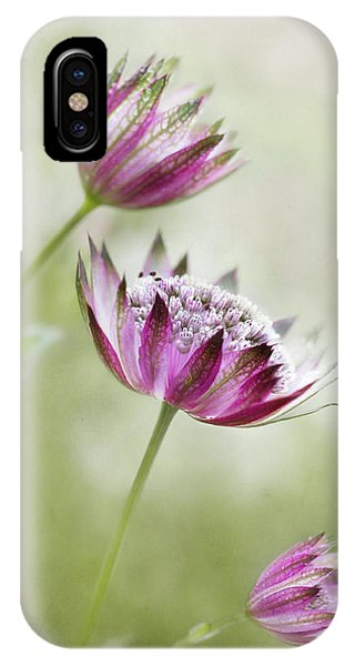 Macro iPhone Case - Astrantia by Mandy Disher