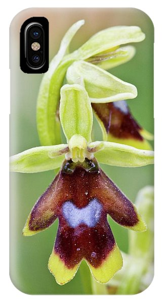 Monocotyledon iPhone Case - Aymonin's Orchid (ophrys Aymoninii) by Bob Gibbons