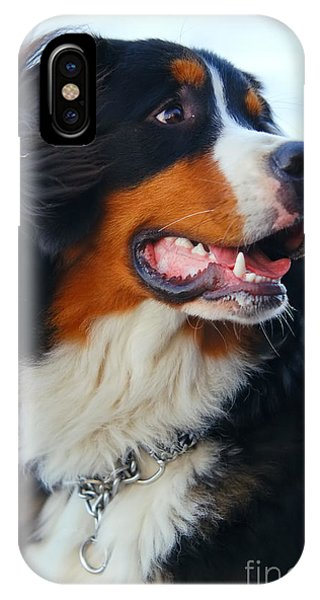 Beautiful Dog Portrait IPhone Case