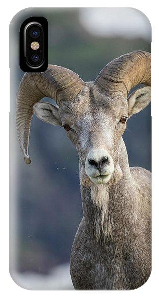 Rocky Mountain Bighorn Sheep iPhone Case - Bighorn Sheep, Glacier National Park by Yitzi Kessock