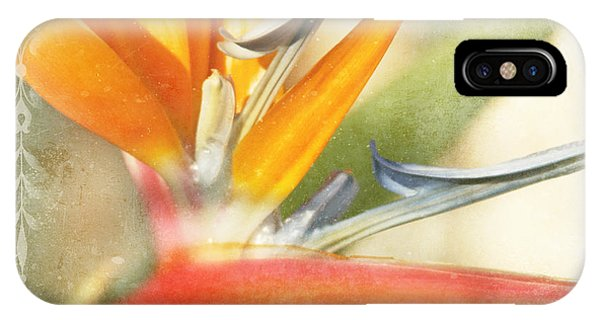 Bird Of Paradise - Strelitzea Reginae - Tropical Flowers Of Hawaii IPhone Case