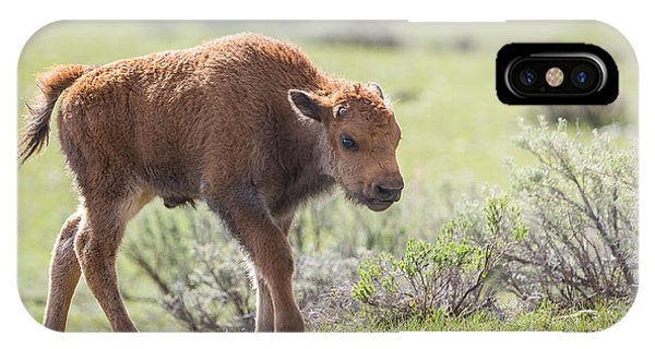 Bison Calf IPhone Case