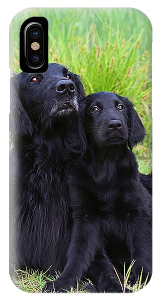 Wiese iPhone Case - Black Flat Coated Retriever With Puppy by Dog Photos