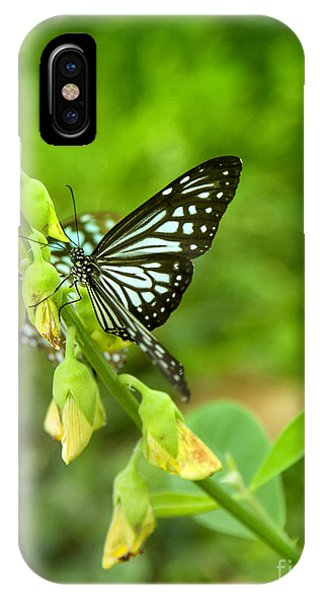 Blue Butterflies In The Green Garden Phone Case by Gina Koch