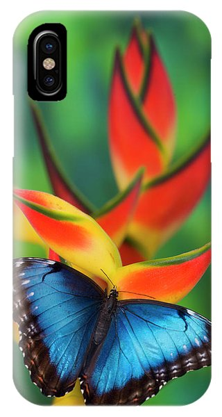 iPhone Case - Blue Morpho Butterfly Sitting by Darrell Gulin