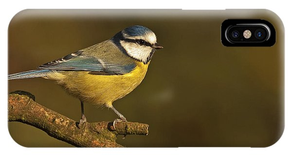 Blue Tit  IPhone Case