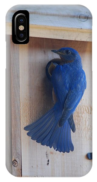Bluebird Of Happiness IPhone Case
