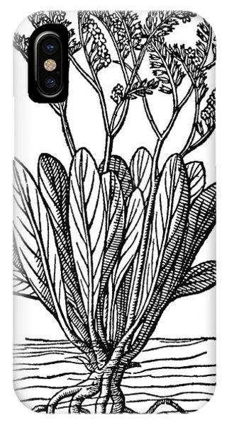 Lavender iPhone Case - Botany Sea Lavender by Granger