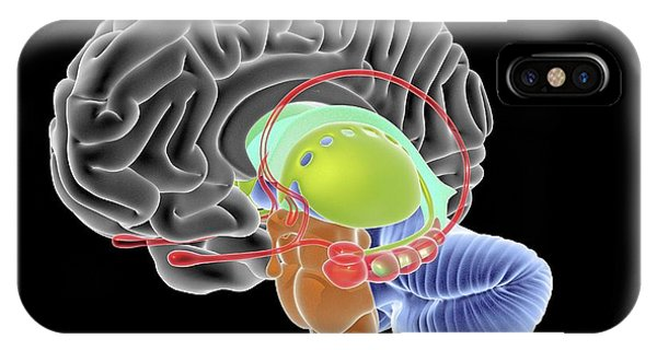 Brainstem iPhone Case - Brain Section by Alfred Pasieka