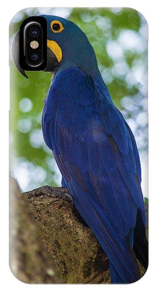 Macaw iPhone Case - Brazil Hyacinth Macaw (anodorhynchus by Ralph H. Bendjebar