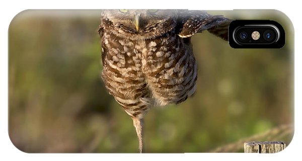 Burrowing Owl Photograph IPhone Case