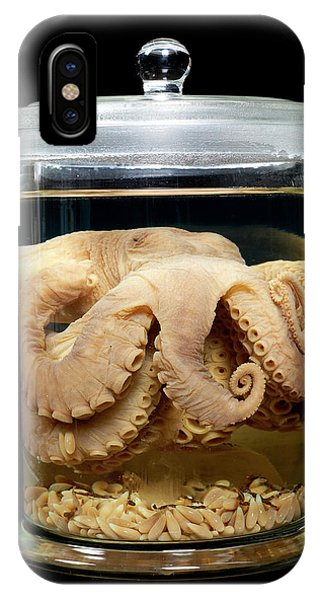 North London iPhone Case - Caribbean Reef Octopus by Natural History Museum, London