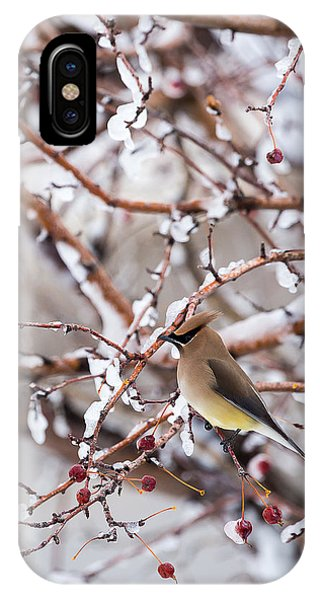 Cedar Waxwing IPhone Case