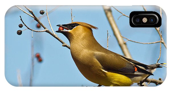 Cedar Waxwing With Berry IPhone Case