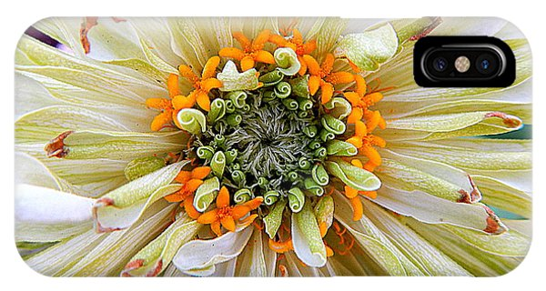 Chrysanthemum Fall In New Orleans Louisiana IPhone Case