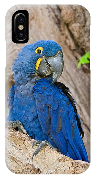 Macaw iPhone Case - Close-up Of A Hyacinth Macaw by Panoramic Images