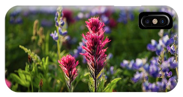 Scarlet Paintbrush iPhone Case - Close-up Of Wildflowers, Mount Rainier by Panoramic Images