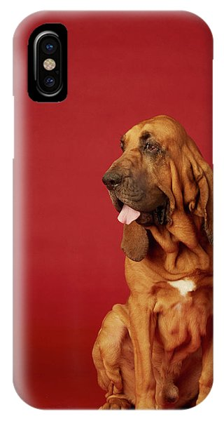 iPhone Case - Close Up Portrait Of A Bloodhound by Rebecca Hale