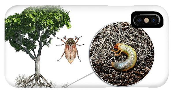 Cockchafer And Beech Tree IPhone Case