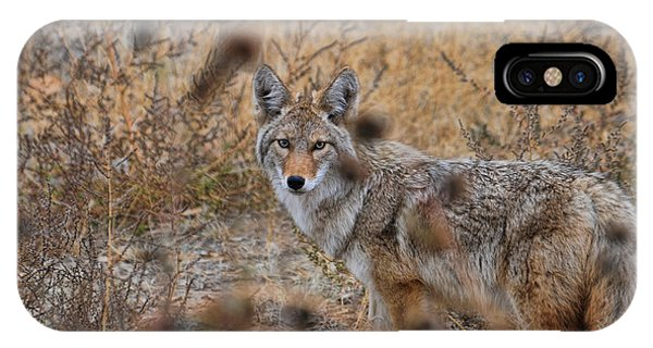 Coyote Eyes IPhone Case