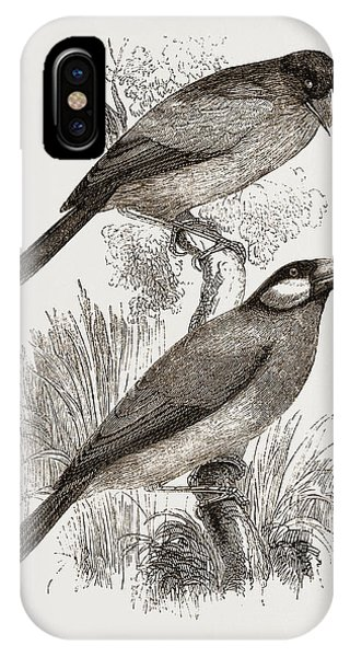 Crossbills IPhone Case