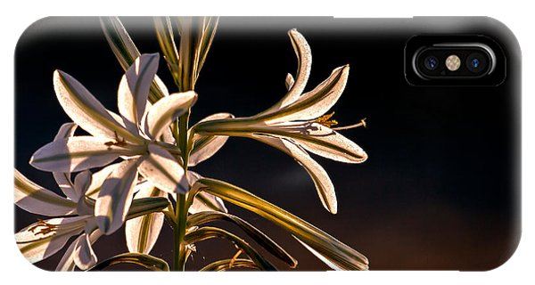 Desert Easter Lily IPhone Case