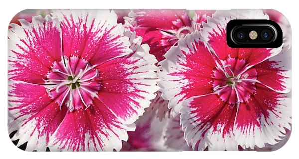 Dianthus 'summer Splash' Flowers Phone Case by Ann Pickford