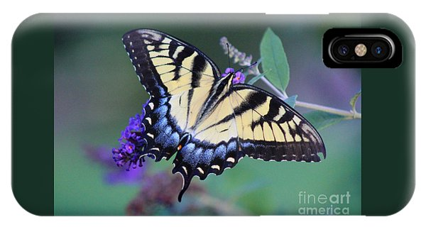 Eastern Tiger Swallowtail Butterfly On Butterfly Bush IPhone Case